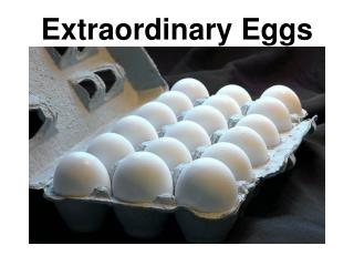 Extraordinary Eggs