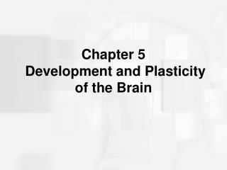 Chapter 5  Development and Plasticity of the Brain