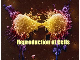 Reproduction of Cells