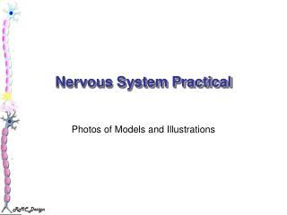 Nervous System Practical