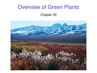 Overview of Green Plants
