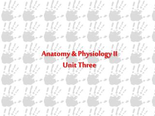 Anatomy & Physiology II Unit Three