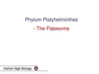 Phylum Platyhelminthes - The Flatworms