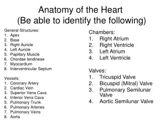 Anatomy of the Heart  (Be able to identify the following)