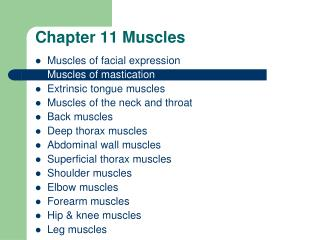 Chapter 11 Muscles
