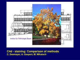C4d -  staining: Comparison of methods C. Seemayer, A. Gaspert, M. Mihatsch