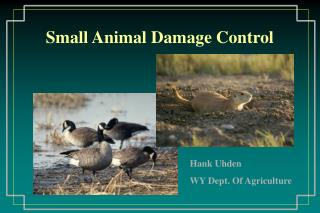 Small Animal Damage Control