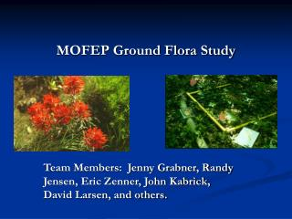 MOFEP Ground Flora Study