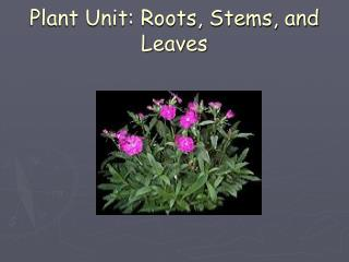 Plant Unit: Roots, Stems, and Leaves