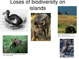 Loses of biodiversity on islands