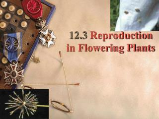 12.3  Reproduction in Flowering Plants