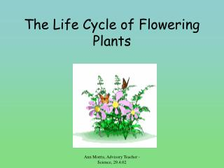 The Life Cycle of Flowering Plants