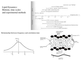 Lipid Dynamics: Motions, time scales and experimental methods