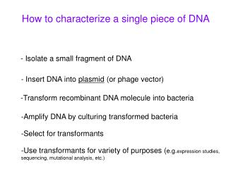 How to characterize a single piece of DNA