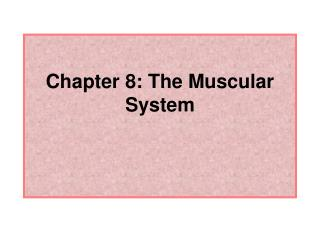 Chapter 8: The Muscular System