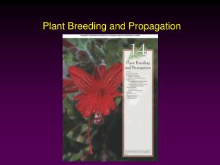 Plant Breeding and Propagation