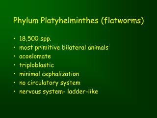 Phylum Platyhelminthes (flatworms)