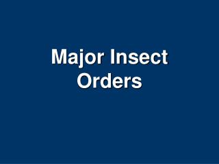 Major Insect Orders