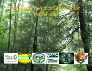 Tennessee Hemlock Conservation Partnership