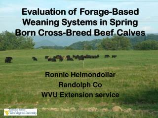Evaluation of Forage-Based Weaning Systems in Spring Born Cross-Breed Beef Calves