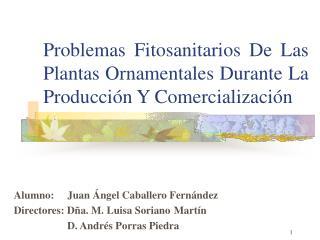 Problemas Fitosanitarios De Las Plantas Ornamentales Durante La Producción Y Comercialización