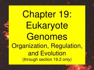 Chapter 19: Eukaryote Genomes Organization, Regulation, and Evolution (through section 19.2 only)
