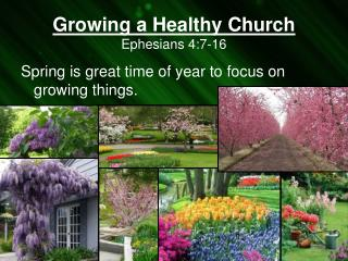Growing a Healthy Church Ephesians 4:7-16