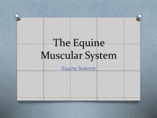 The Equine Muscular System