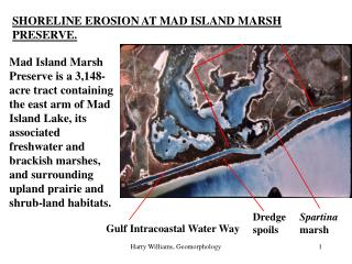 SHORELINE EROSION AT MAD ISLAND MARSH PRESERVE.