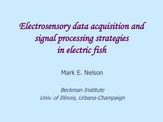 Electrosensory data acquisition and signal processing strategies  in electric fish