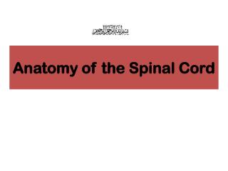 Anatomy of the Spinal Cord
