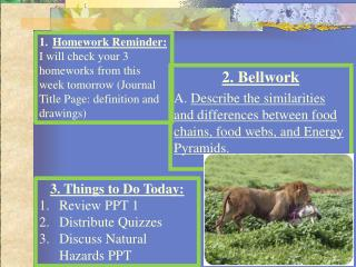 2. Bellwork A.  Describe the similarities and differences between food chains, food webs, and Energy Pyramids.