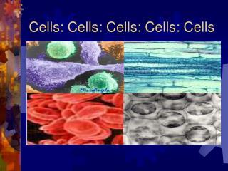 Cells: Cells: Cells: Cells: Cells