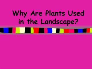 Why Are Plants Used in the Landscape?