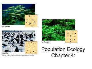 Population Ecology Chapter 4: