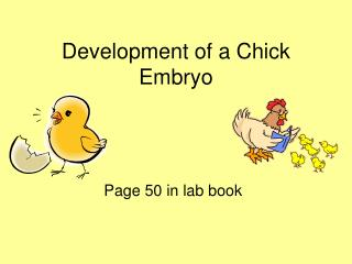 Development of a Chick Embryo