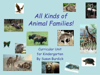 All Kinds of  Animal Families!