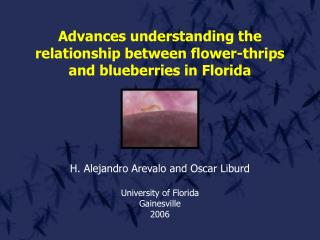Advances understanding the relationship between flower-thrips and blueberries in Florida