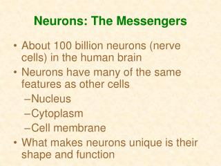 Neurons: The Messengers