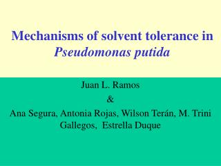 Mechanisms of solvent tolerance in  Pseudomonas putida