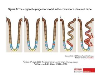 Feinberg AP  et al.  (2005) The epigenetic progenitor origin of human cancer
