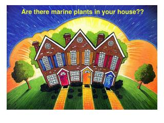 Are there marine plants in your house??