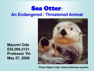 Sea Otter :  An Endangered / Threatened Animal