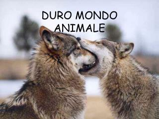 DURO MONDO ANIMALE