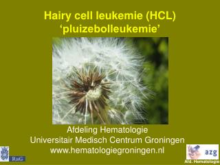 Hairy cell leukemie (HCL) 'pluizebolleukemie'