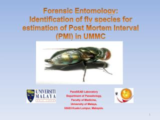 Forensic Entomology: