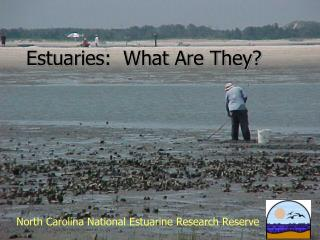 Estuaries:  What Are They?
