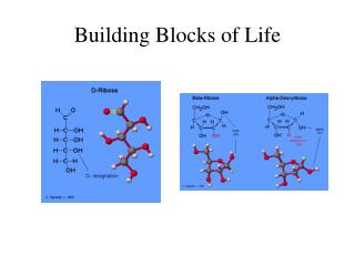 Building Blocks of Life