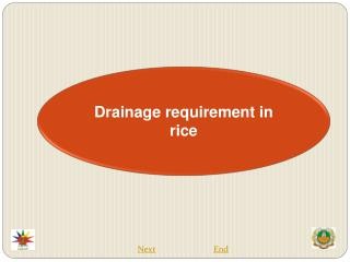 Drainage requirement in rice