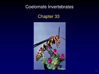 Coelomate Invertebrates